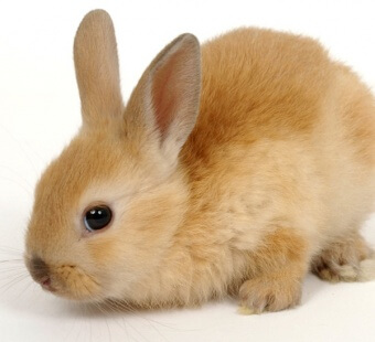 9 Reasons Why You Shouldn't Buy a Bunny