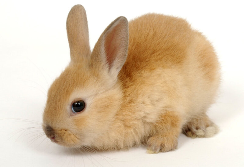 9 Reasons Why You Shouldnt Buy a Bunny Save Animals PETA Kids