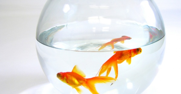 Where Do Fish in Pet Stores Come From?