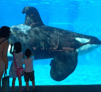 7 Horrible Things That Can Happen to You at SeaWorld