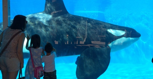 Horrible Things That Can Happen at SeaWorld