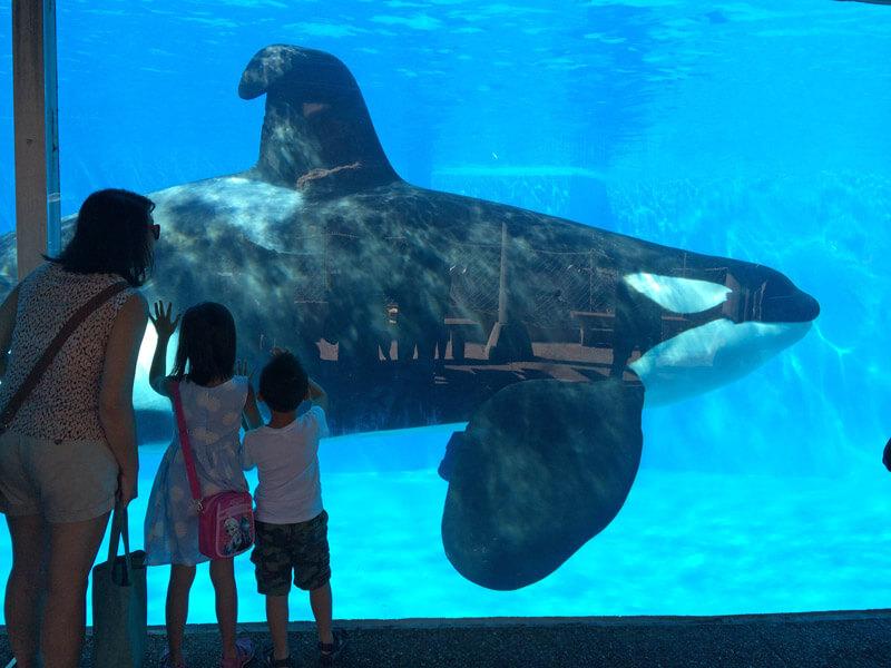 SeaWorld Collapsed Dorsal Fin Orca