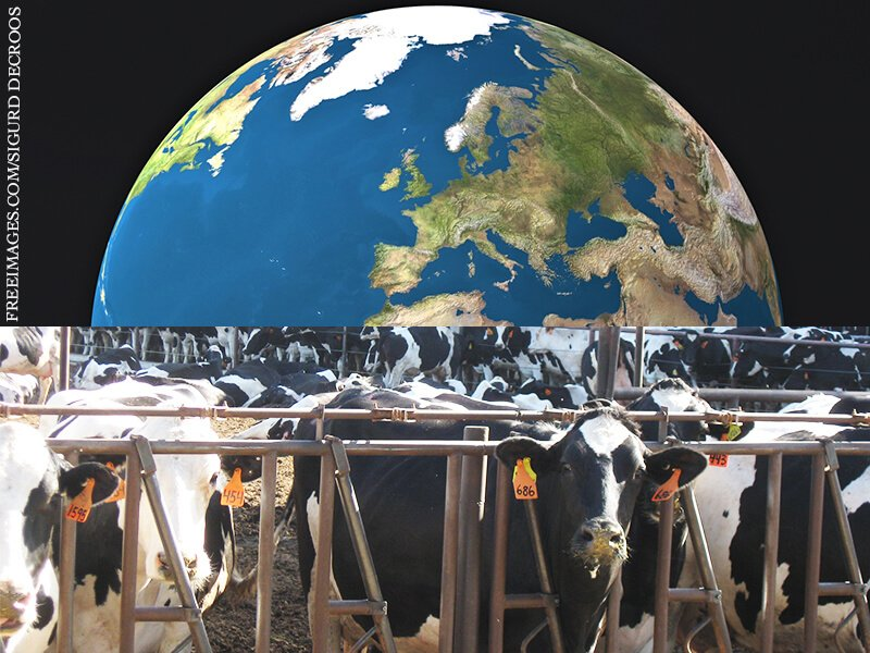 Earth-and-Cows