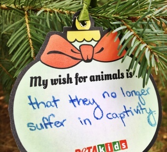 My New Year's Wish for Animals Is …