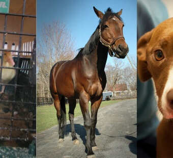 35 Incredible Animal Rescues