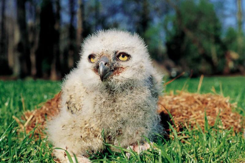 Arthur-the-owl