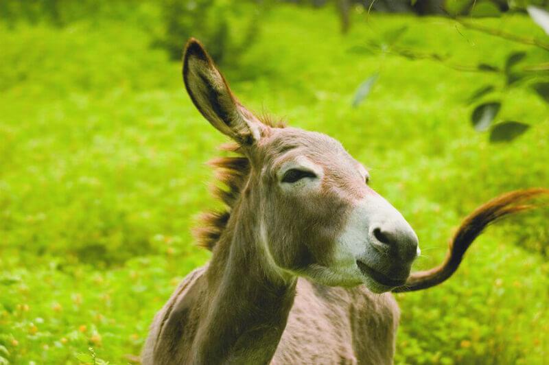 Donkey Parineeta Rescue