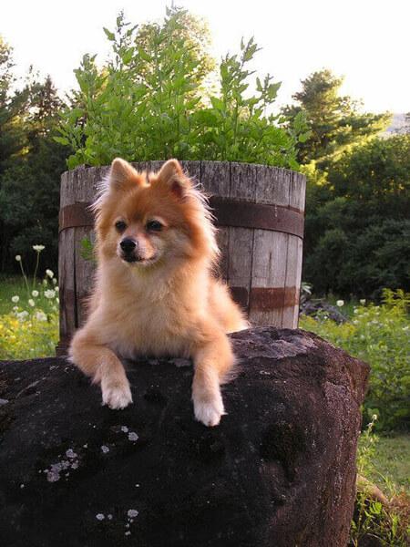 Nola-Dog-Rescue