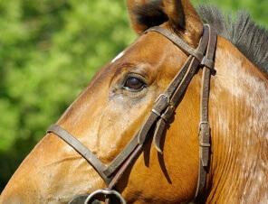 5 Reasons Why Horse Racing is Cruel
