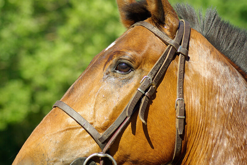 5 Reasons Why Horse Racing is Cruel | Save Animals | PETA Kids