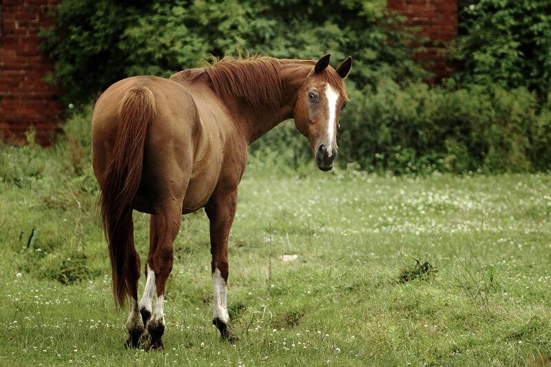 Horse-on-Grass