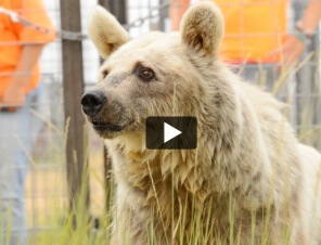 Bears Freed After Decades of Misery
