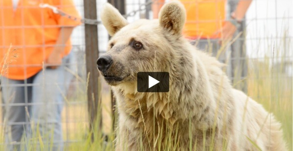 Rescued-Bears-Promo-E-mail-Image