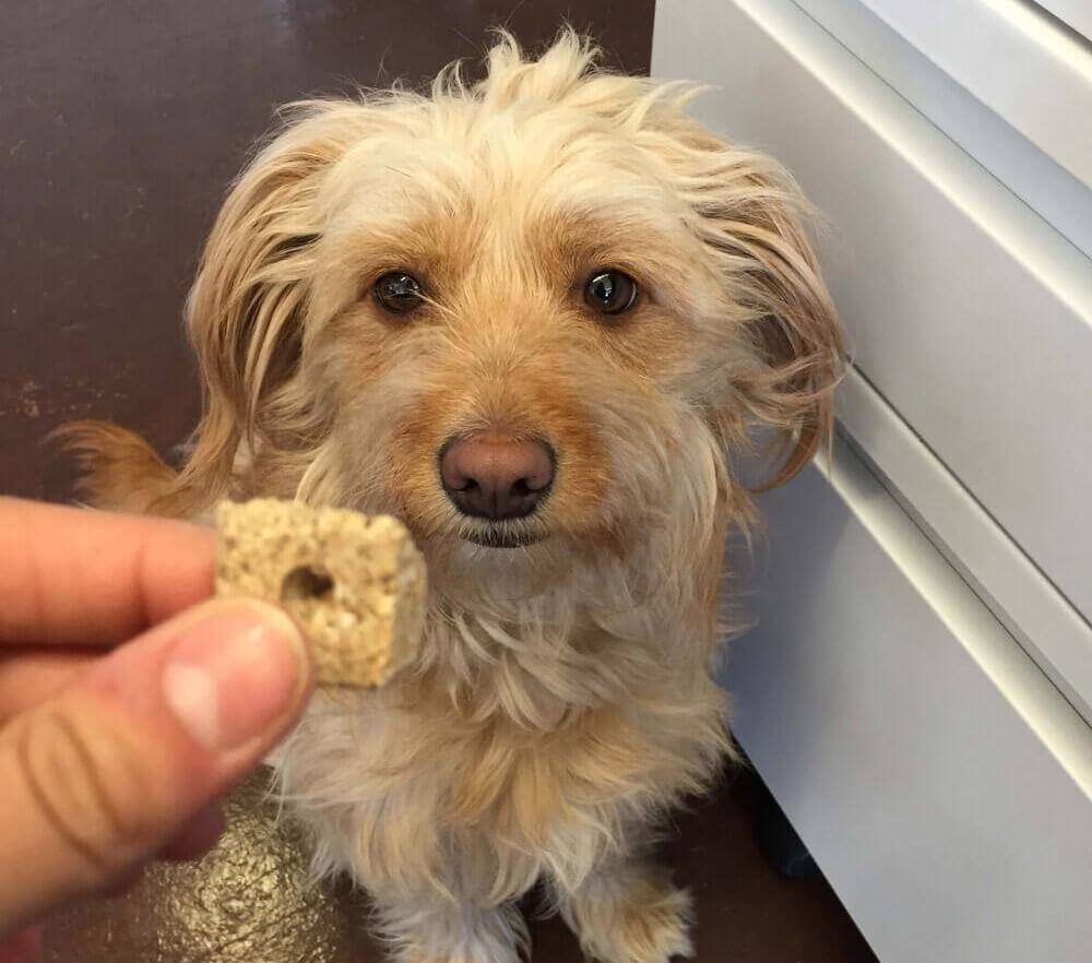 jovie dog treat