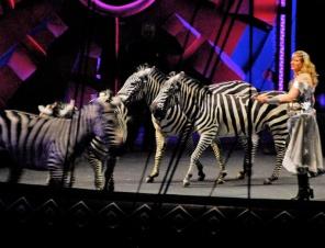 Zero Happiness for Zebras in Circuses