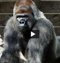 Proof That Zoos Are Miserable Places