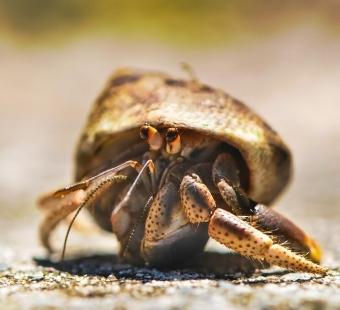 Pledge Never to Buy Hermit Crabs!