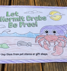 Hermit Crab Coloring Sheets