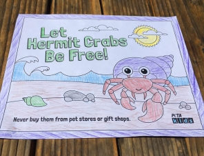 hermit-crab-coloring-sheet