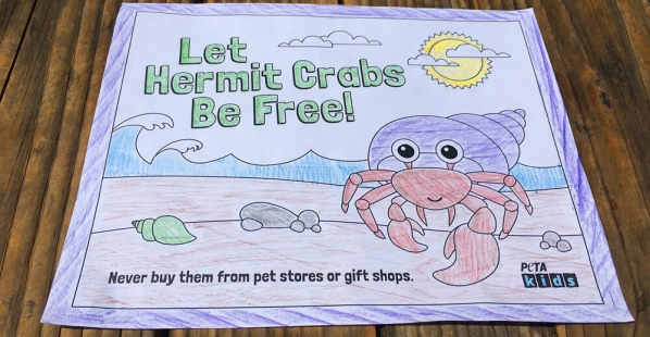 hermit-crab-coloring-sheet