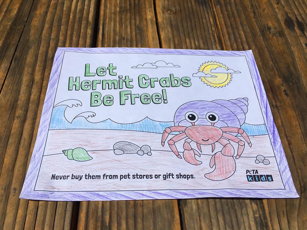 Hermit Crab Coloring Sheets | Activities | PETA Kids