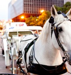 8 Reasons Why Horse-Drawn Carriages Are Just Plain Wrong