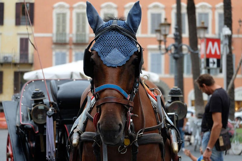 Brown-Horse-Drawn-Carriage