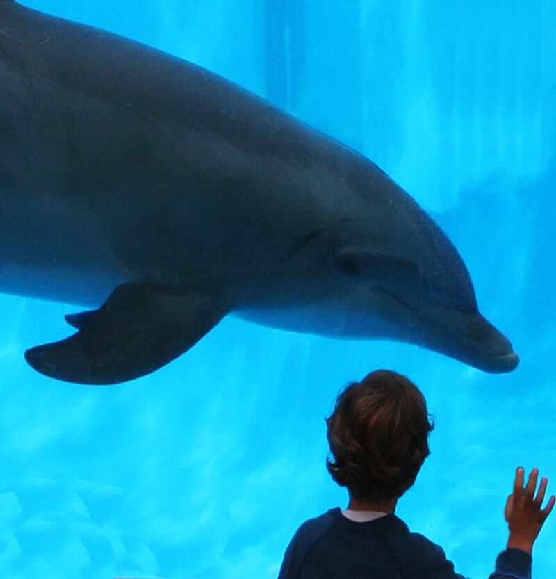 Dolphin-in-Tank-and-Boy