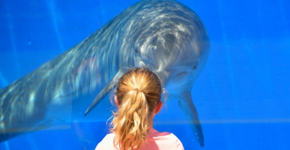 Dolphin-in-Tank-with-Girl