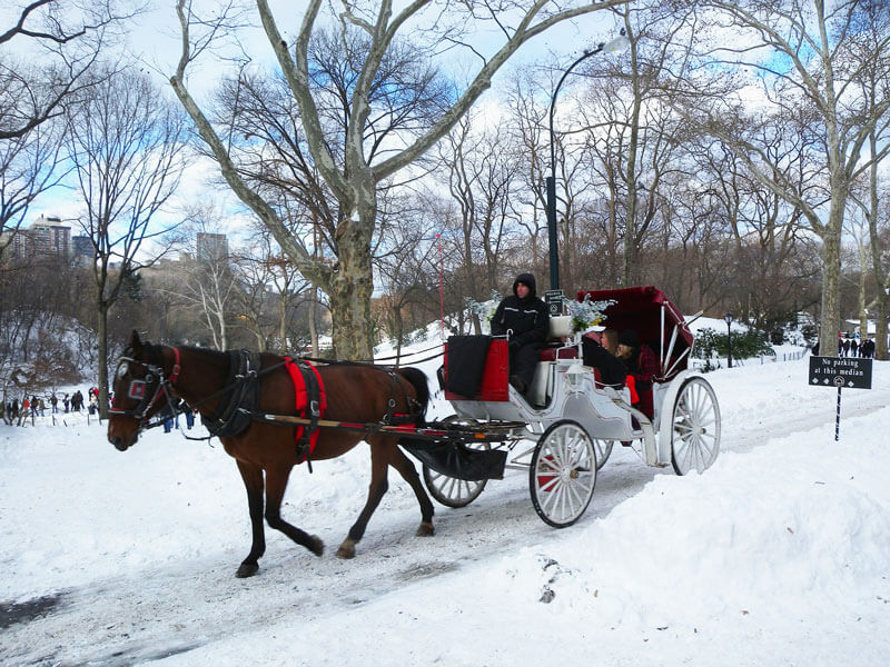 Horse-Drawn-Carriage-in-Snow