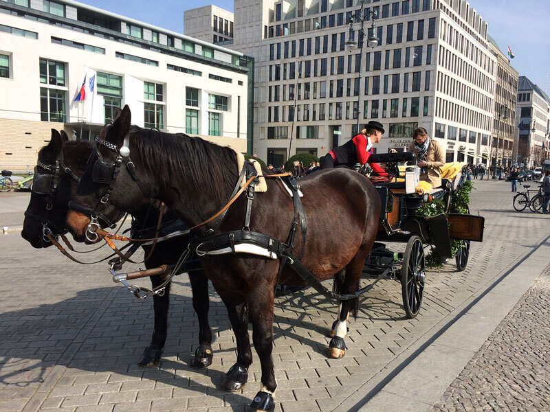 Horses-in-City-Carriage