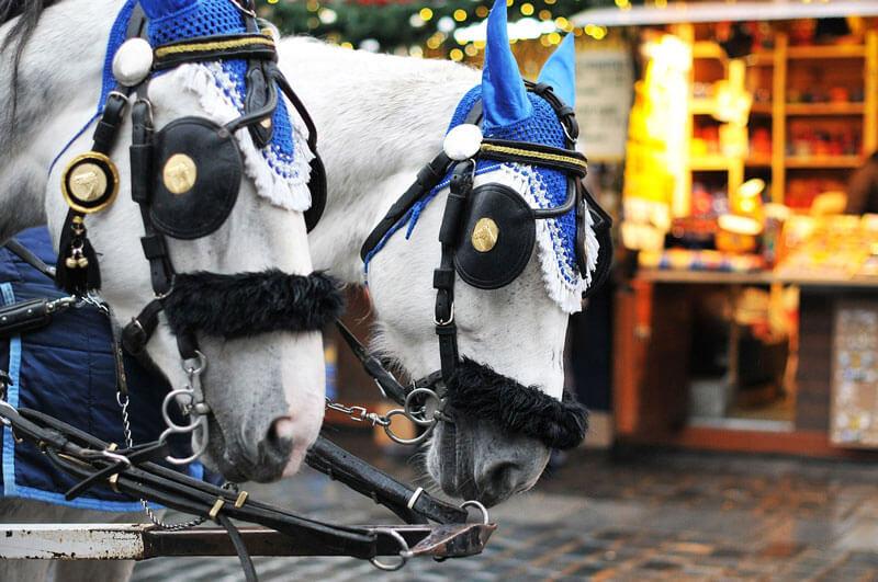 White-Horses-Drawn-Carriage