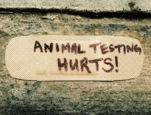 Proof That Animal Testing Is Not OK