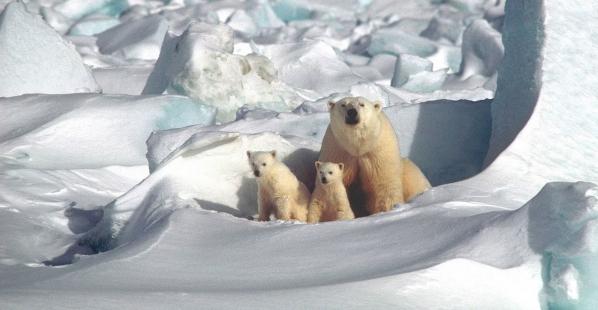 Amazing Animal Mothers