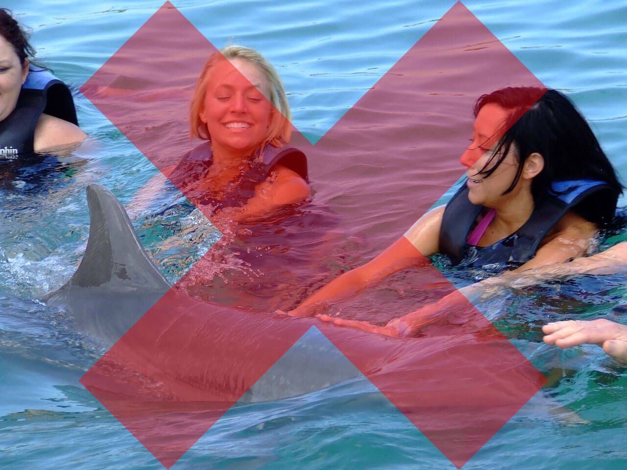 swimming with dolphins is cruel save animals peta kids