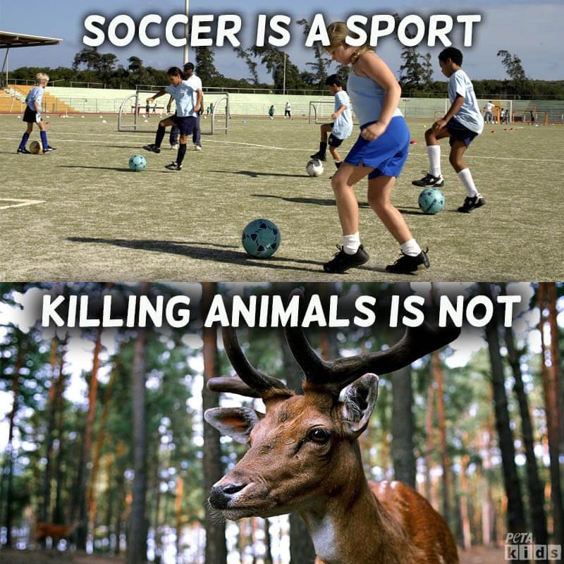 what hunting isn t save animals peta kids