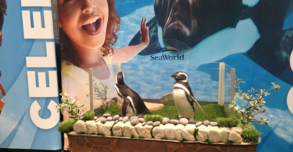Orcas Aren't the Only Animals Who Suffer at SeaWorld
