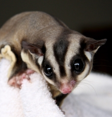 Why Exotic 'Pets' Don't Belong in Your Home