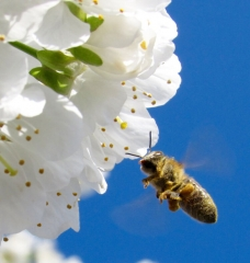 Get the Buzz on Ways to Help Bees