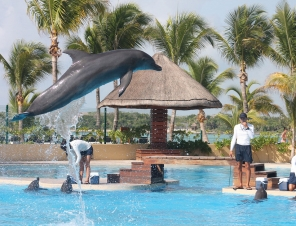 What It's Like to Be a Dolphin Used for Tourism