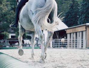 How Does PETA Kids Feel About Horseback Riding?