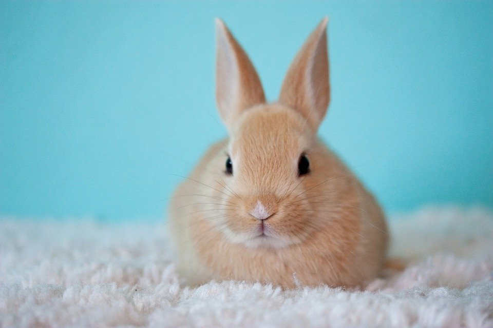 Bunnies For Sale Near Me >> 9 Reasons Why You Shouldn T Buy A Bunny Save Animals