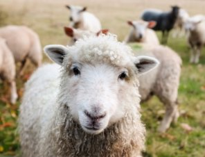 Forever 21 Needs to Stop Selling Wool