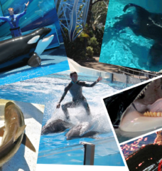 9 Reasons NOT to Take Your Kids to SeaWorld