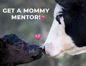 Got Mommy Qs? Sign Up for a Vegan Mommy Mentor!