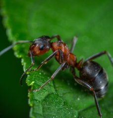 Interesting Insects and How to Help Save Them