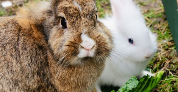 Give Bunnies a 'Hand' With This Animal-Friendly Activity