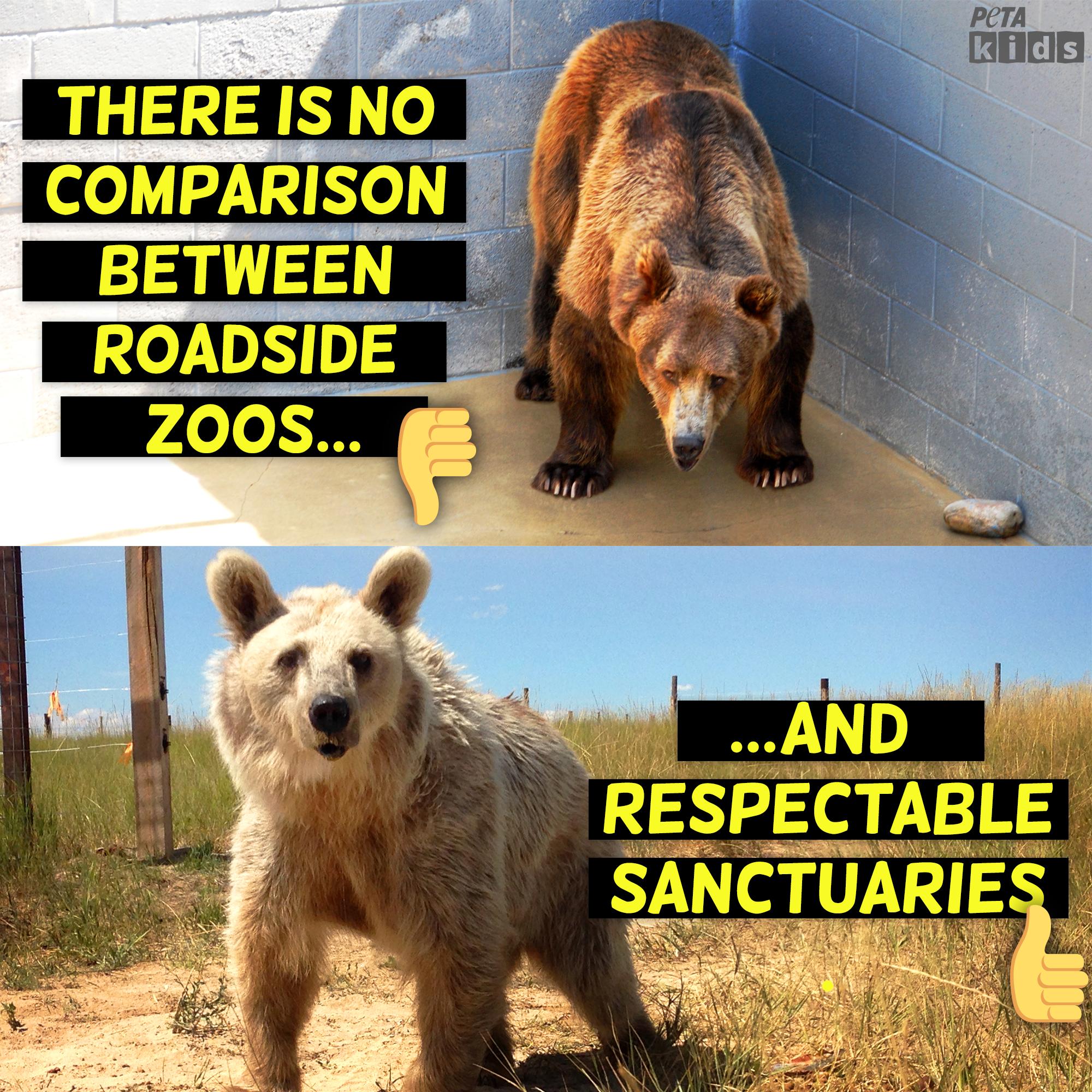 Roadside zoo vs. Animal Sanctuary