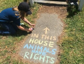 Chalk Your Driveway for Animals!