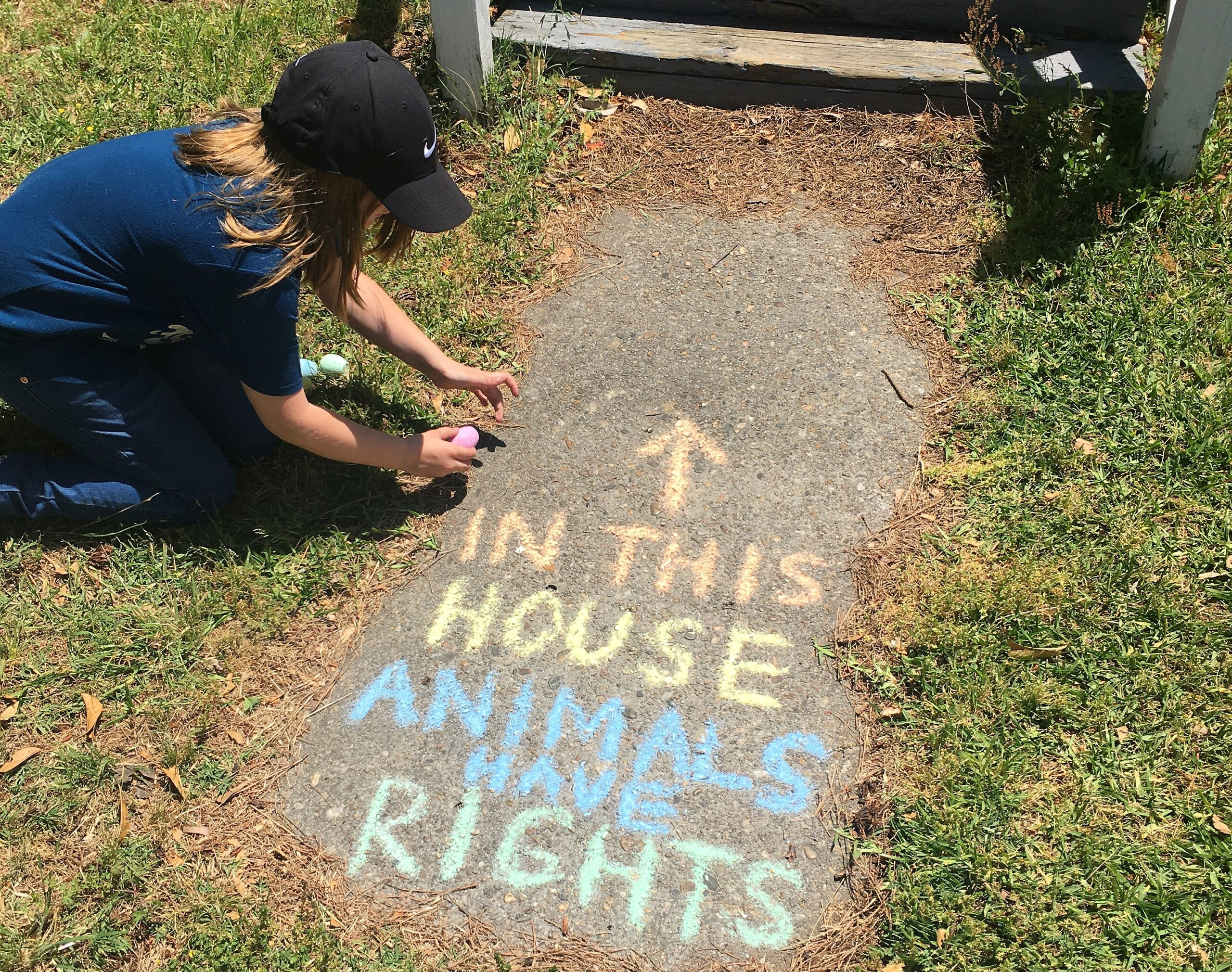 in this house animals have rights chalk art